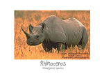 X-tra! A PEACE for ENDANGERED SPECIES (en) - Rhino